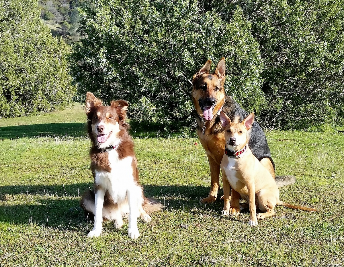 Click image for larger version  Name:Three Amigos.jpg Views:64 Size:920.7 KB ID:99355
