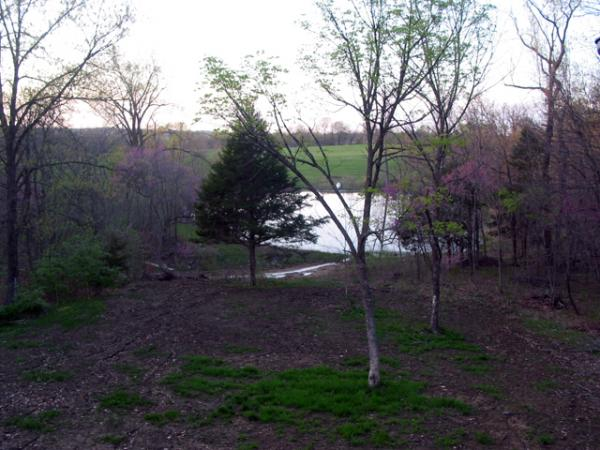 back yard this evening, 3/30/2012