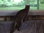 Kato checking his surroundings.