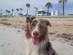 Beverly Beach Camptown, Flagler Beach