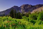 Albion Basin, Alta, Utah
