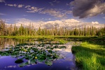 Quiet Reflection, Lily Lake
