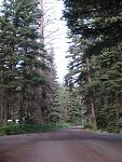 Aspen Glade Colorado