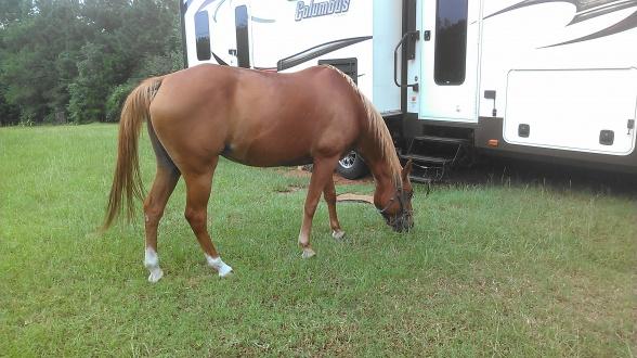 Our horse Sugar