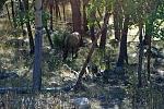 Elk in ESTE PARK CO